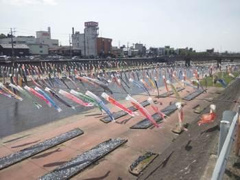 加茂川鯉のぼり.JPG