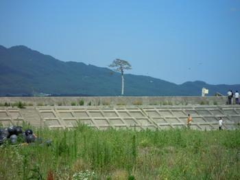 陸前高田の一本松.jpg